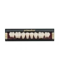 3-ijų sluoksnių Primodent dantys